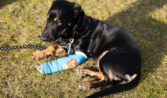 Beinbruch eines Hundes beim Ballspiel – Haftung Ballwerfer