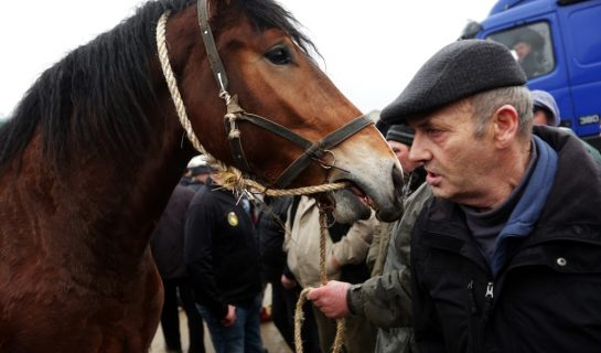 Wirksamer Rücktritt vom Pferdekaufvertrag – vorherige Fristsetzung zur Nacherfüllung