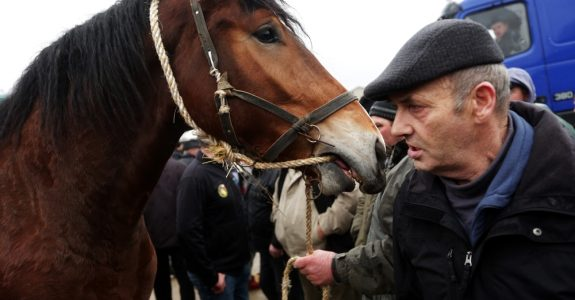 Wirksamer Rücktritt vom Pferdekaufvertrag - vorherige Fristsetzung zur Nacherfüllung