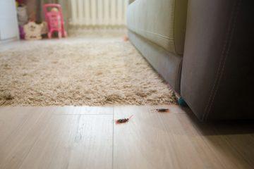 Unwirksamer Gewährleistungssauschluss bei Hausverkauf – Verschweigen eines Schädlingsbefalls