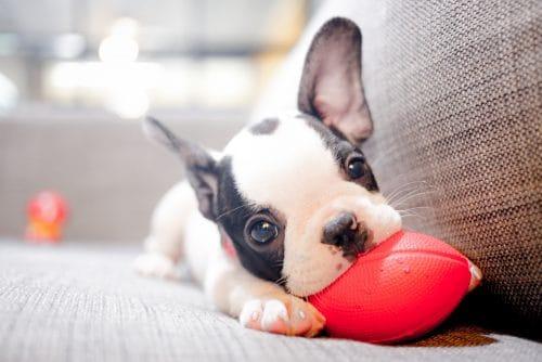 Kaufvertrag über Hundewelpen - Minderungsrecht bei Gendefekt bei Gefahrübergang