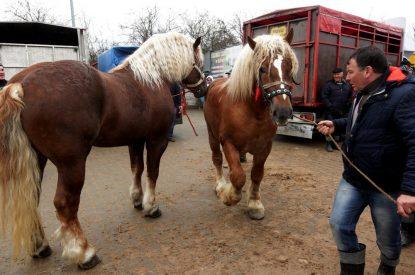 Pferdekaufvertrag – Gewährleistungsausschluss